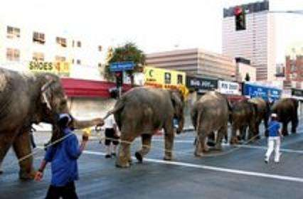 Michael Jackson Elephants