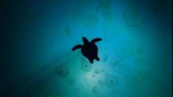 turtleswim1
